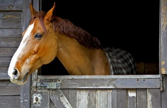 New Study Might Answer The Question Of Why Horses Snort