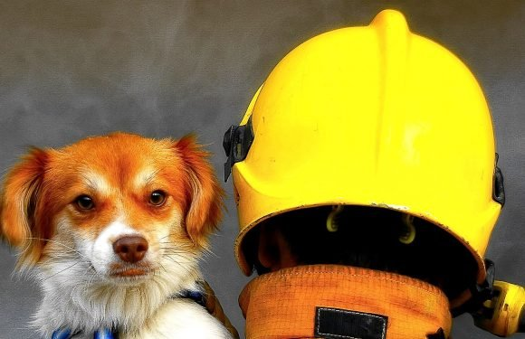 9 Fire-Safety Tips That Could Save Your Pet's Life
