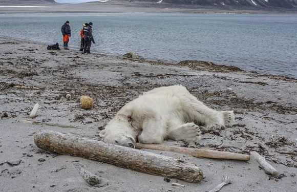 Polar bear is shot dead after attacking tour guide near North Pole