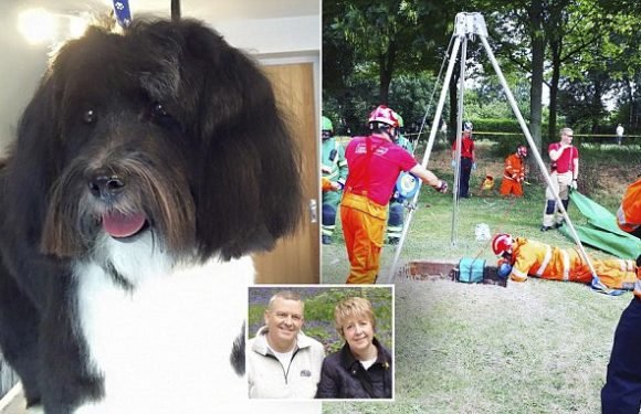 Pet owner rescued after he leapt down drain to rescue his trapped dog