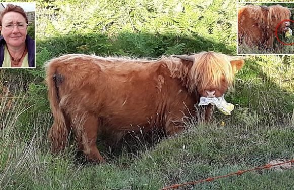 Holidaymaker saves bull after startling it into spitting out bag