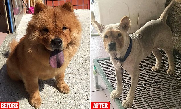 Woman devastated after her mother completely shaved her dog 'naked'