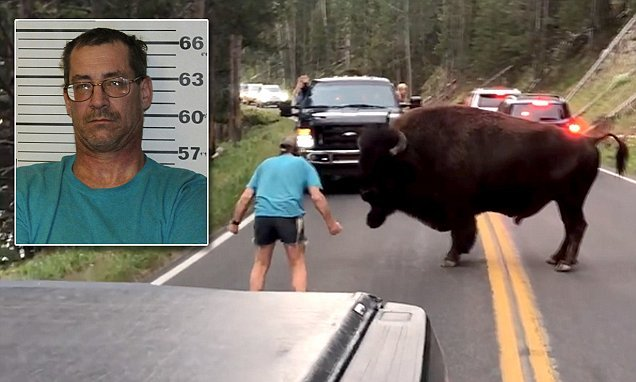 Yellowstone rangers arrest Oregon man for taunting a bison