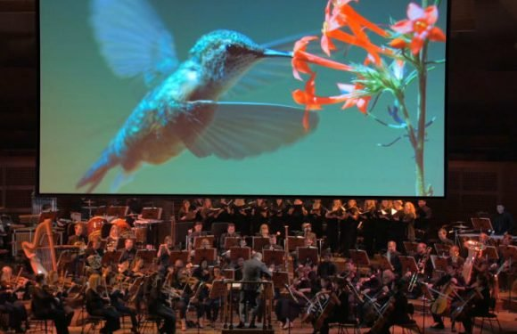 The Aussie composer who scored the sound of nature