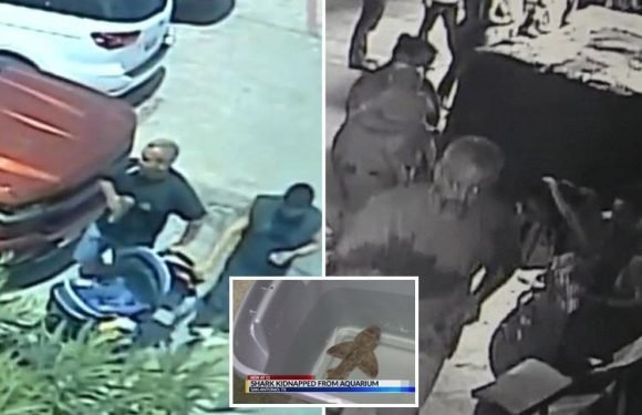 Brazen thieves stole live SHARK from San Antonio aquarium by pretending it was a baby in a pram