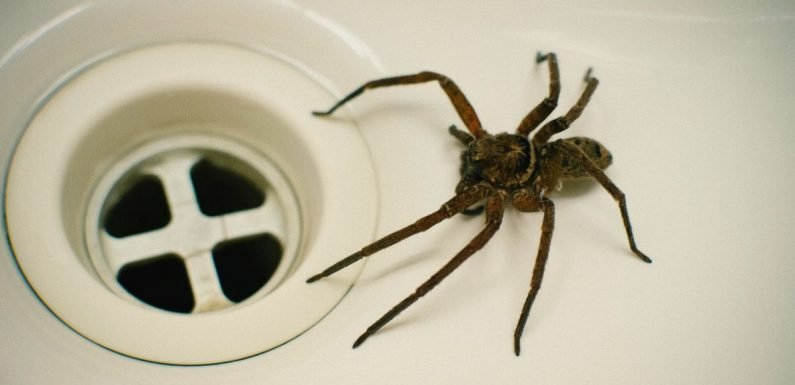 Genius methods to keep spiders out of your home this summer