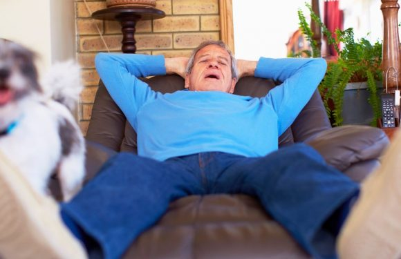 Evolution might favour 'survival of the laziest', study claims