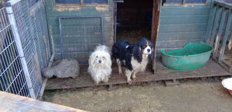 """Cruel breeder banned from keeping animals after raid on """"disgusting"""" puppy farm"""