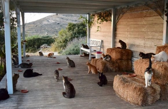 Cat lovers can apply for a dream job on a beautiful island looking after 55 cats