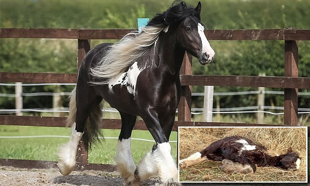 Pony left for dead in field transforms into champion