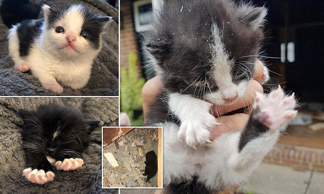Kittens rescued after workmen about to demolish building heard cries