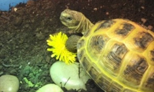 Manchester police mocked after appealing for help to find tortoise