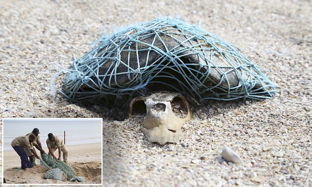 Tragic image shows the skeleton of a turtle wrapped in plastic netting