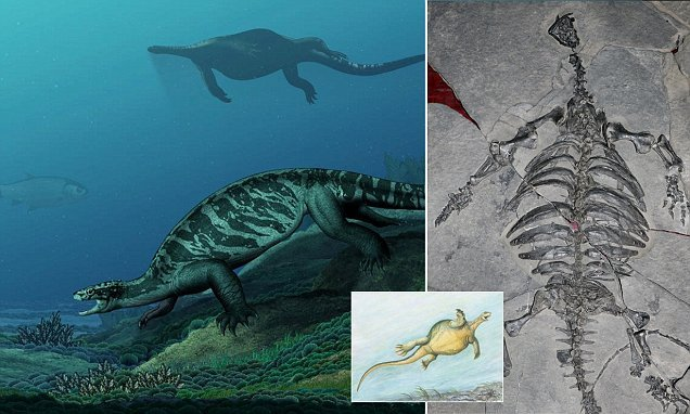 A giant sea turtle that lived 228 MILLION years ago had no shell