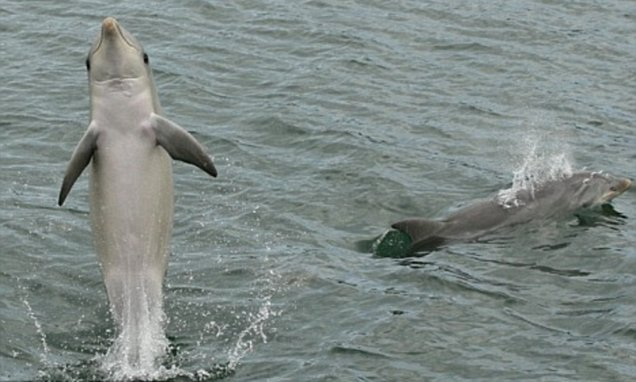 Scientists find evidence that dolphins have a tendency to show-off