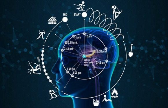 Researchers find 'neural clock' that lets brain keep track of time