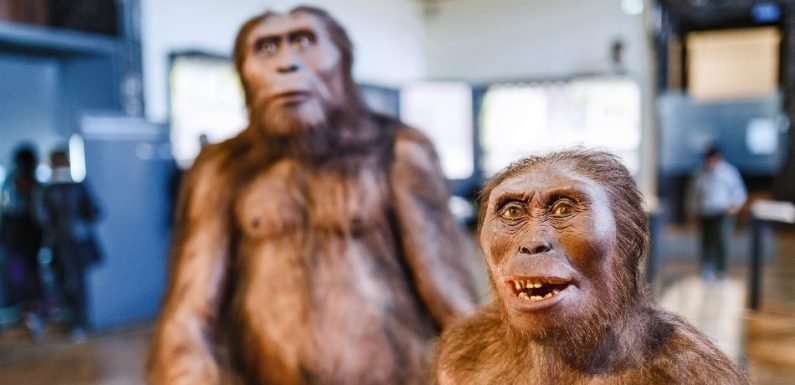 Homo Erectus Went Extinct Because They Were 'Lazy,' Reveals New Study