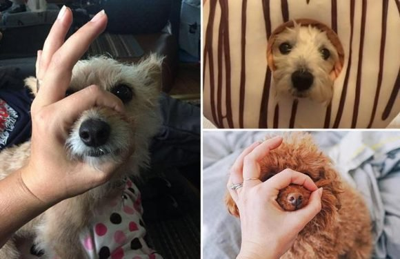 Hilarious snoot dog challenge is the internet's cutest viral craze – but can your pup do it?