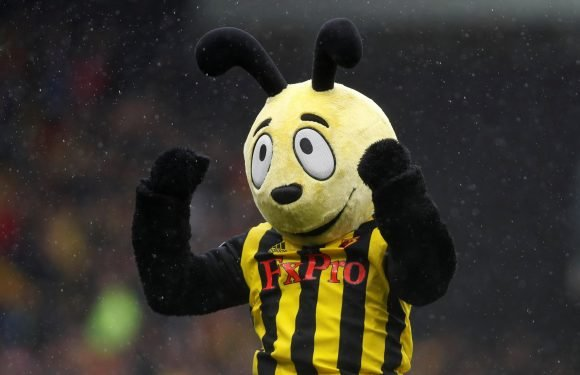 Harry the Hornet risks Roy Hodgson wrath by diving for Watford fans after victory over Crystal Palace