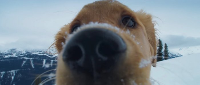 'Superpower Dogs' Trailer: They're Good (Superpower) Dogs, Brent