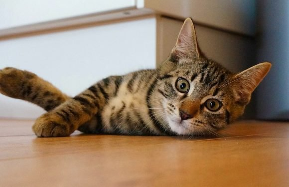 5 Signs Your Cat Is Living His or Her Best Life