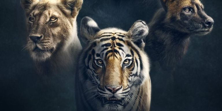 David Attenborough's new TV series Dynasties is coming, and here's a first look