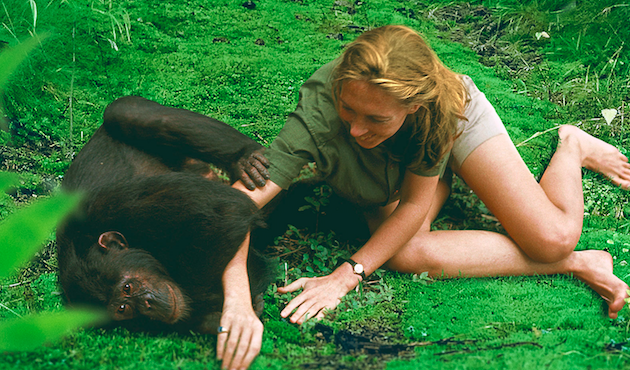 'Jane': Why 50-Year Old 16mm Archival Footage of Goodall and the Chimps Looks So Good