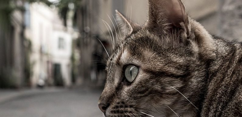 Domestic cats reportedly facing potential ban in New Zealand town