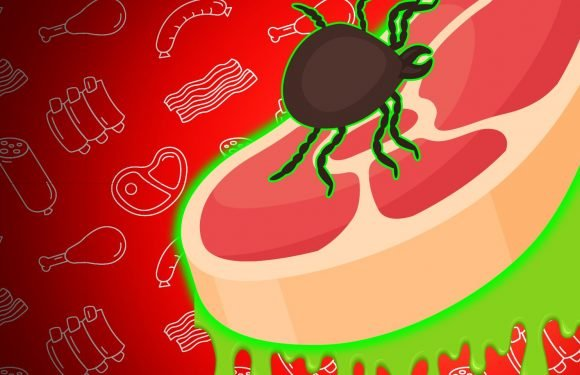 One bite from this tick could ruin red meat for the rest of your life