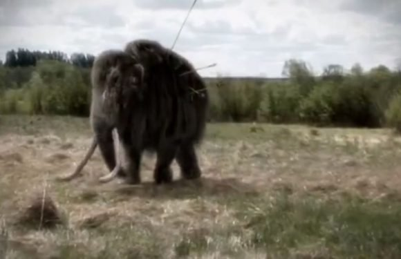 Woolly mammoth speared to death in brutal film showing how beasts were hunted