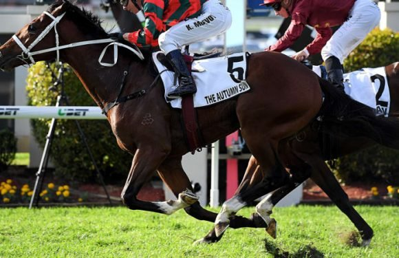 Waller looking to come up Rosy with three-year-old quartet