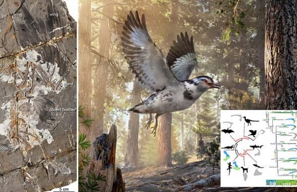 New bird species reveals stepping stone between dinosaurs and birds