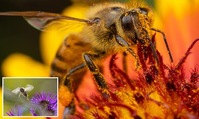 Honeybees are being killed by world's most popular weedkiller Roundup