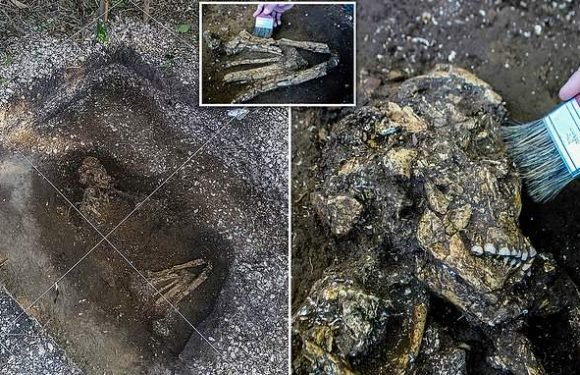 6,000-year-old human skeletons have been found in a construction site