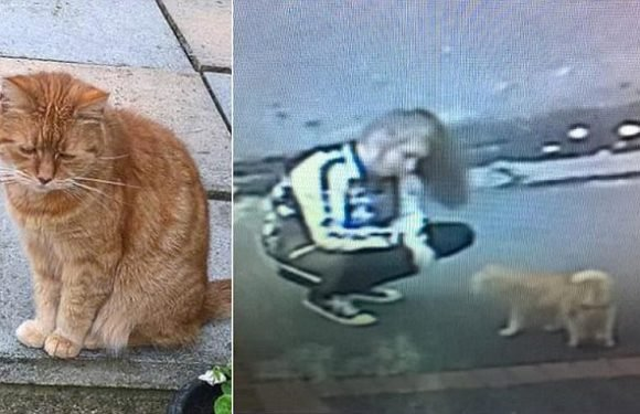 Shocking moment two women 'stuff a cat into a rucksack and run off'