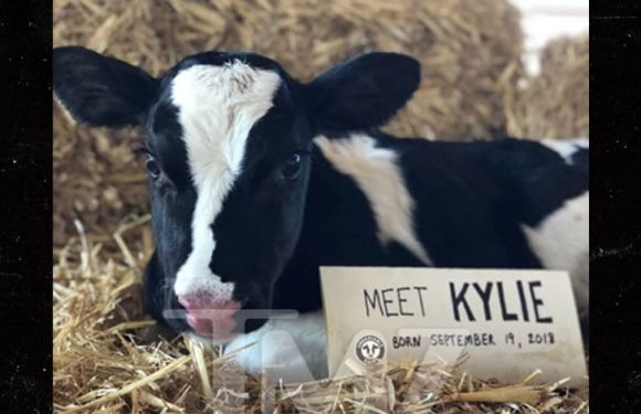 Kylie Jenner's Milk Discovery Inspires Dairy Farmer to Name Baby Cow After Her