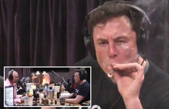 Tesla stocks crash nine per cent hours after CEO Elon Musk is filmed smoking marijuana live on YouTube amid Thai diver 'paedo' scandal