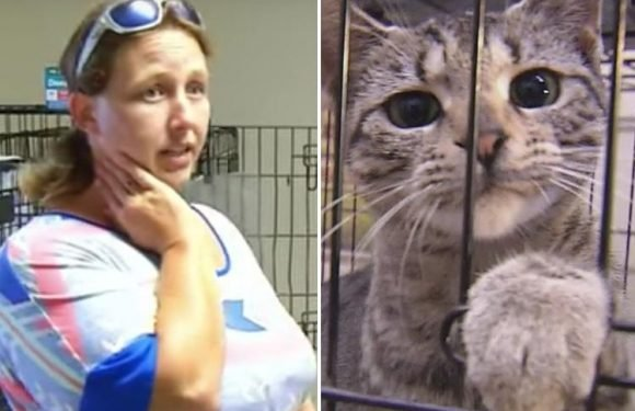 Kind woman who cared for sick animals trapped in Hurricane Florence floods is CHARGED with practising veterinary medicine without licence