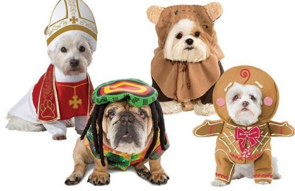 Make your pet look their beastly best in these spooky Halloween costumes… priced from just £10