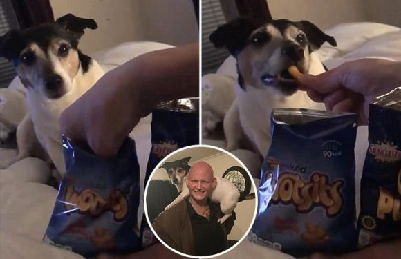 Food snob dog refuses to eat supermarket own-brand Wotsits – even when owner tries to fool him by mixing up the packets