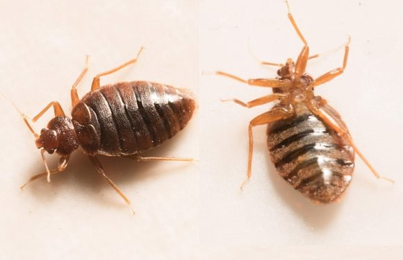 It turns out bed bugs can be picked up on public transport, according to an expert