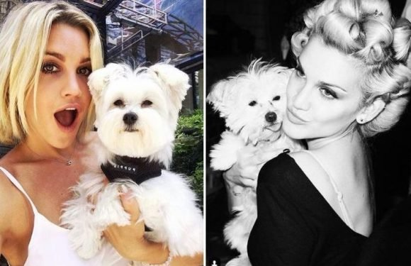 Strictly's Ashley Roberts devastated after pet pooch is 'mauled in dog attack' at London park