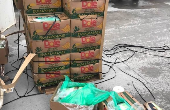 Nearly $18 Million Worth of Cocaine — More than 500 Packages — Found Hidden in Donated Bananas