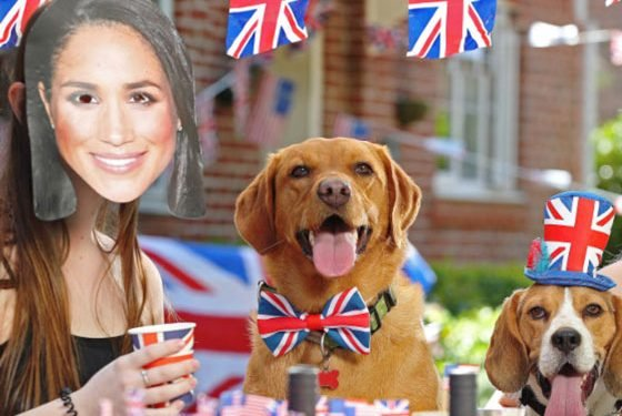 A Royal Mystery: Was Duchess Meghan Spotted Picking Up Dog Poo?