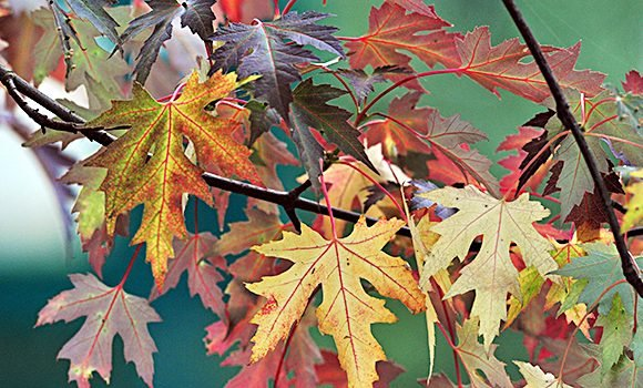 Fall Equinox: What Time Is It Exactly & More Things You Didn't Know About The 1st Day Of Autumn