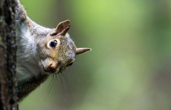 Iowa squirrel hunter accidentally shoots own brother on first day of season