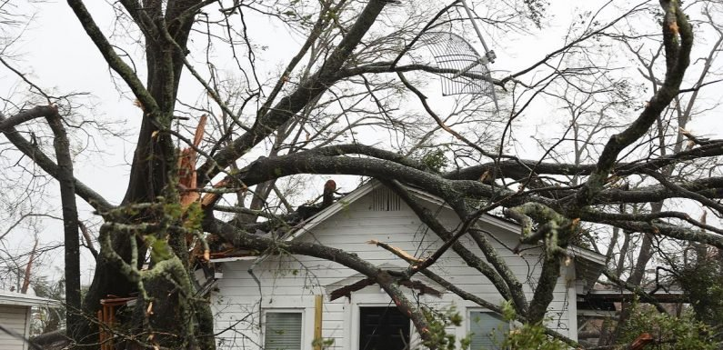 Hurricane Michael claims first death as man killed by falling tree in Florida