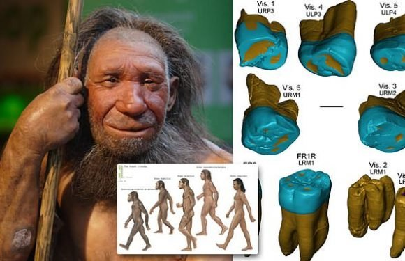 Fossil teeth show Neanderthals had features 450,000 years ago