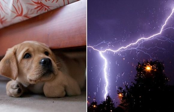 Revealed: The one way to keep your dog calm during a thunderstorm