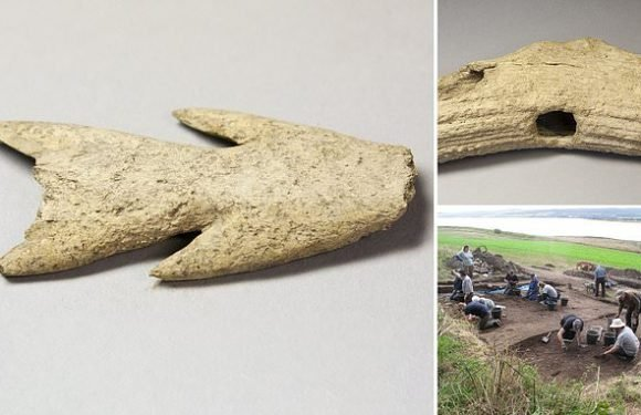 Tools made from red deer antler which are believed to 6,000-years-old